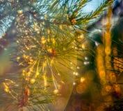 Les pins détaillent après pluie photos stock