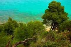 Les pins s'approchent du bord de la mer Photographie stock libre de droits