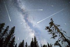 Les pins silhouettent des étoiles filantes de manière laiteuse Images stock