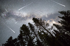 Les pins silhouettent des étoiles filantes de manière laiteuse Images libres de droits