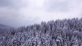 Les pins sont neige couverte Vue de ci-avant Silhouette d'homme se recroquevillant d'affaires banque de vidéos