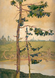 Les pins sur le rivage Image stock