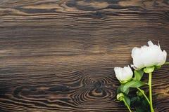 Les pivoines blanches fleurit sur le fond en bois, vue supérieure L'espace vide pour le texte photos libres de droits