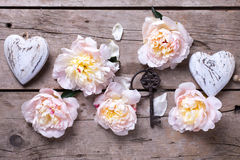 Les pivoines de coeurs, principales et roses décoratives fleurit sur en bois âgé Photos libres de droits