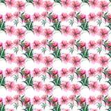 Les pivoines de fines herbes florales de beau beau ressort mignon merveilleux doux tendre avec le vert part du croquis de main d' Photos libres de droits