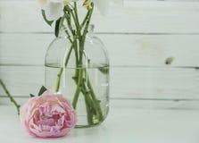 Les pivoines fleurit dans le pot en verre sur le fond blanc en bois photos stock