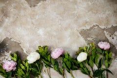 Les pivoines roses fraîches fleurit sur le fond en bois âgé Configuration plate Vue supérieure avec l'espace de copie Foyer sélec Image stock