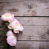 Les pivoines roses fraîches fleurit sur le fond en bois de vintage Images stock