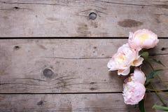 Les pivoines roses fraîches fleurit sur le fond en bois de vintage Images libres de droits