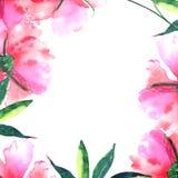 Les pivoines roses pulvérulentes beiges botaniques de fines herbes florales de beau ressort merveilleux sophistiqué doux lumineux Photographie stock