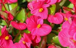 Les plantes et les fleurs colorées fleurissent et en vente dans le flo Photo libre de droits