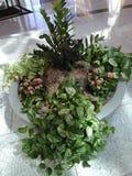 Les plantes tropicales, la fougère, et les fleurs roses est un pot en pierre gris photo libre de droits