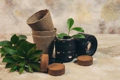 Les plantes vertes croissantes dans le vieil objectif de caméra utilisé de photo et la réutilisation réutilisent le concept d'eco photographie stock