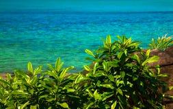 Les plantes vertes s'approchent de la mer bleue image libre de droits