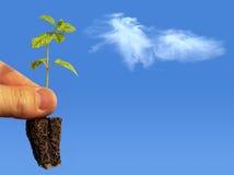 Les plantes vertes sont des poumons de la terre Images libres de droits