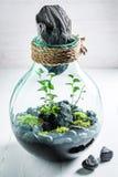Les plantes vivantes étonnantes dans un pot, sauvent l'idée de la terre Photographie stock libre de droits