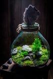 Les plantes vivantes merveilleuses dans un pot, sauvent l'idée de la terre Photographie stock