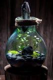 Les plantes vivantes renversantes dans un pot, sauvent l'idée de la terre Image libre de droits