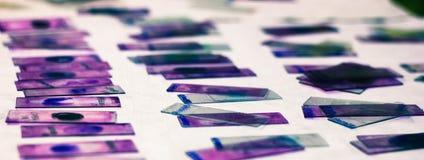 Les plaques en verre souillé de la calomnie périphérique de sang avec le giemsa violet de leishman souillent dans le laboratoire  image libre de droits