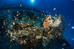 Les plongeurs autonomes et l'école des poissons flotte sur l'épave - Inde image stock