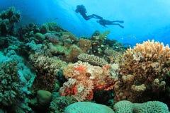 Les plongeurs autonomes explorent le beau récif coralien Image stock
