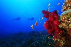 Les plongeurs autonomes explorent le récif coralien Image libre de droits