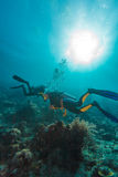 Les plongeurs autonomes s'approchent du fond marin photos stock