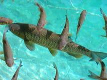 Les poissons Image libre de droits