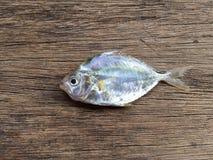 Les poissons blancs marins vietnamiens Photo libre de droits