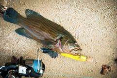 les poissons bleus de la mer pêche par l'amorce de poissons Serranidae Photo stock
