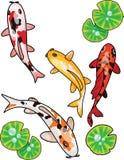 Les poissons cartoony tirés par la main de Koi dirigent le poisson rouge chinois de carpe japonaise d'illustration et la pêche tr illustration stock