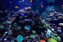Les poissons colorés dans l'aquarium Photographie stock