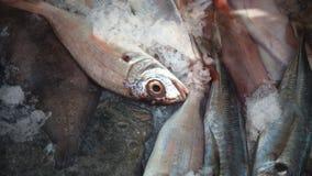 Les poissons congelés Photo stock