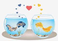 Les poissons couplent dans l'amour Image libre de droits