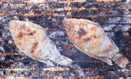 Les poissons couvrent par le sel grillé Photo stock