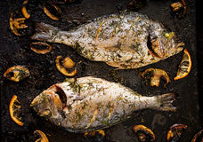 Les poissons cuits au four de dorado en aneth d'ail sauce avec les champignons et le citron photographie stock libre de droits