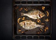 Les poissons cuits au four de dorado en aneth d'ail sauce avec les champignons et le citron images libres de droits