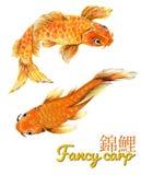 Les poissons de fantaisie orientaux Koi Golden de carpe d'aquarelle ont placé l'illustration sous-marine d'isolement de faune illustration stock