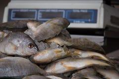 Les poissons empilent avec l'échelle de poids à l'arrière-plan Photographie stock libre de droits