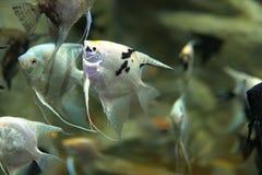 Les poissons exotiques de mer et de rivière nagent dans l'aquarium n Photo libre de droits