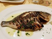 Les poissons grillés ont appelé Dorade photographie stock libre de droits