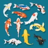 Les poissons japonais dirigent la carpe d'illustration et le koi oriental coloré dans l'ensemble de l'Asie de poisson rouge chino illustration de vecteur