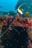 Les poissons jaunes s'approchent du naufrage photos libres de droits