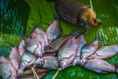 Les poissons locaux montrés sur la banane poussent des feuilles à un marché en plein air de Luang Prabang images stock