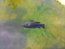 Les poissons meurent Photo stock