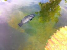 Les poissons meurent Photographie stock