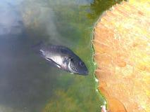 Les poissons meurent Photos libres de droits