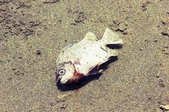 Les poissons meurent style de vintage Photo libre de droits