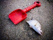 Les poissons morts sur l'image de plage? ont monté avec le symbole décoré de biohazard Concept de pollution de l'eau Images stock