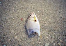 Les poissons morts sur l'image de plage? ont monté avec le symbole décoré de biohazard Concept de pollution de l'eau Photos libres de droits